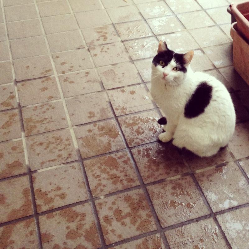 野良ネコのニャー子さまと梅雨(地域猫と暮らす)